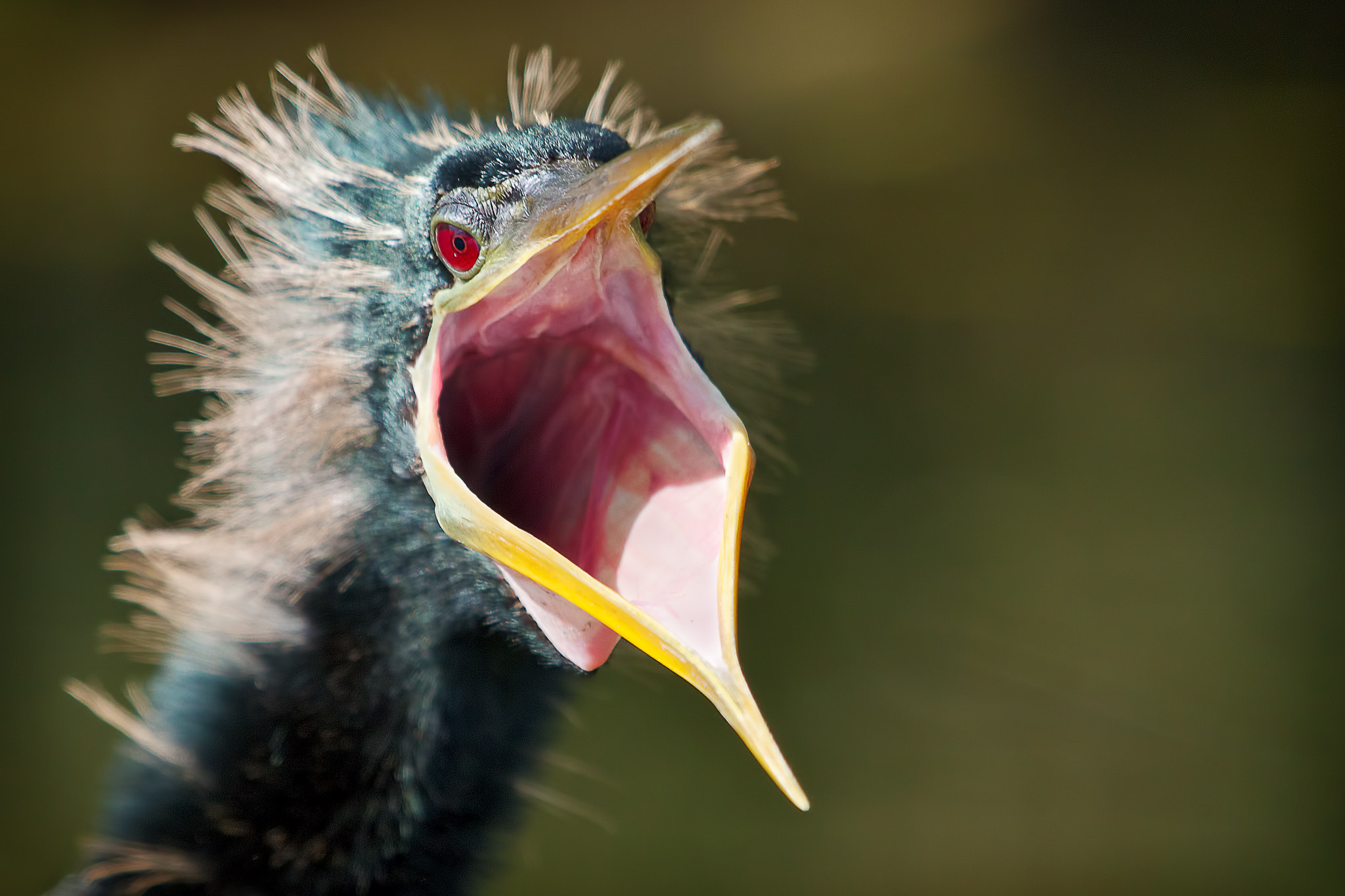 Photograph Scream by Dirk Seifert on 500px