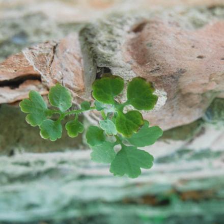 Stoned green, Nikon COOLPIX L610