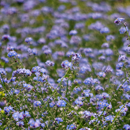 all the flowers, Pentax K-50, HD PENTAX-DA 55-300mm F4-5.8 ED WR