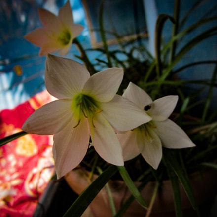 Flower, Canon IXUS 105
