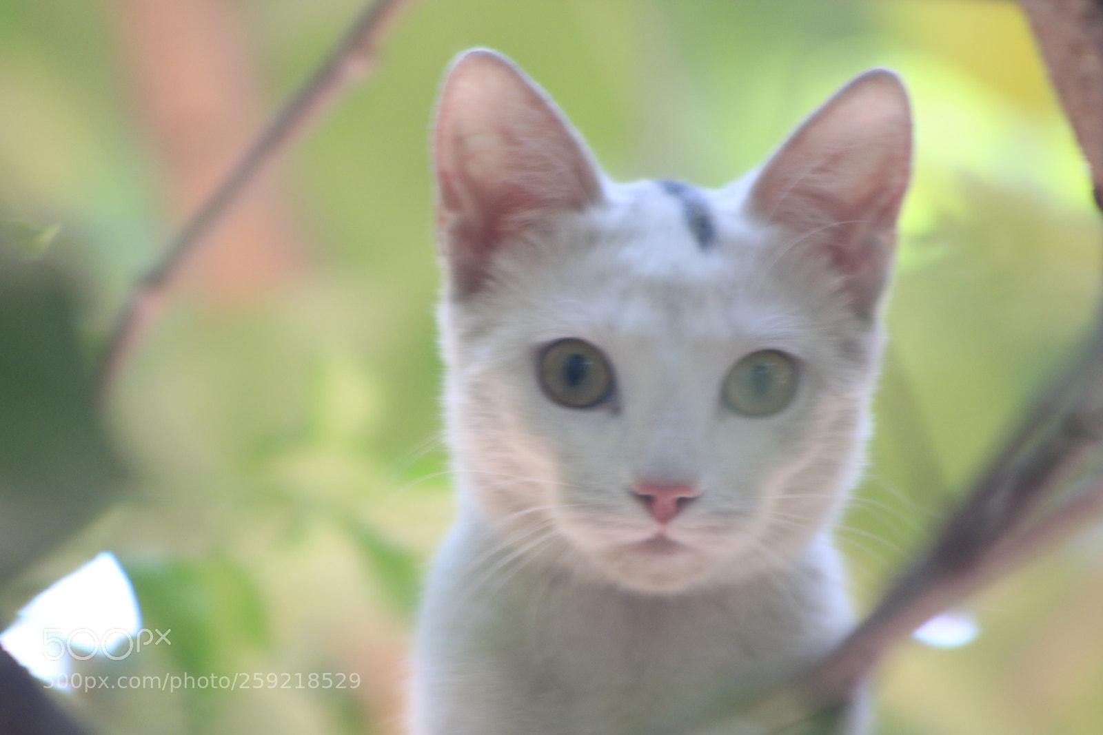 "Canon EOS 750D (EOS Rebel T6i / EOS Kiss X8i) sample photo. ""Mg"" photography"