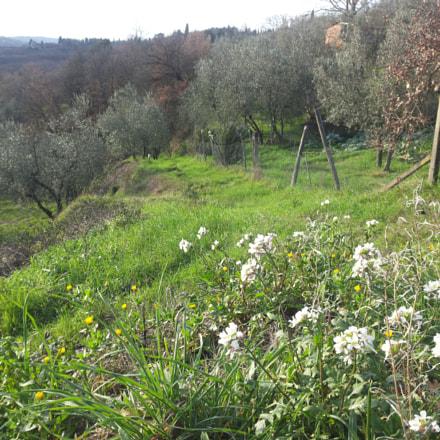tuscan countryside.jpg, Samsung Galaxy S2 Plus