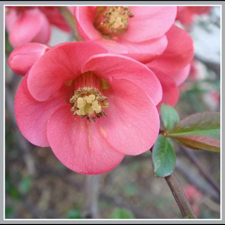 la vie en rose, Sony DSC-T50