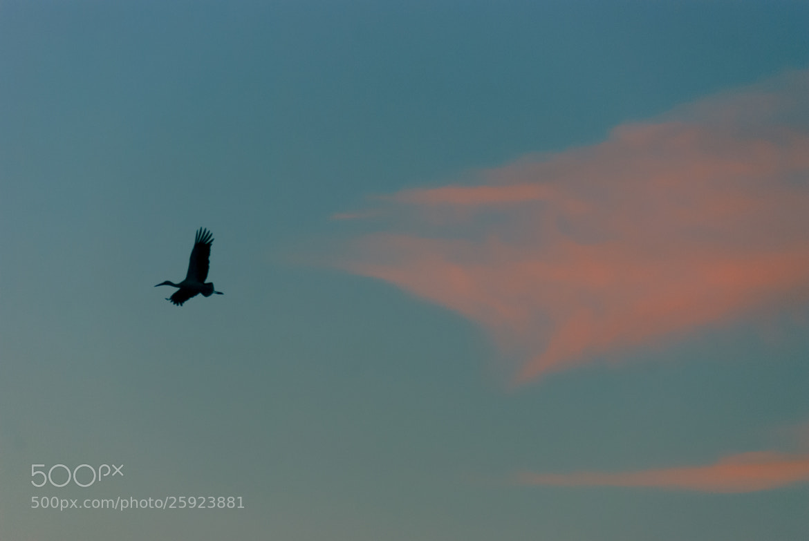 Photograph Fly by Felipe Carrasquilla on 500px