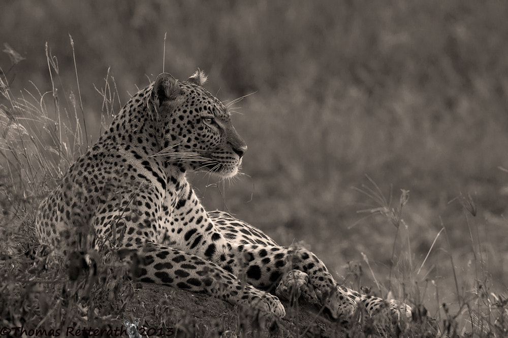 Photograph Relaxed Power by Thomas Retterath on 500px