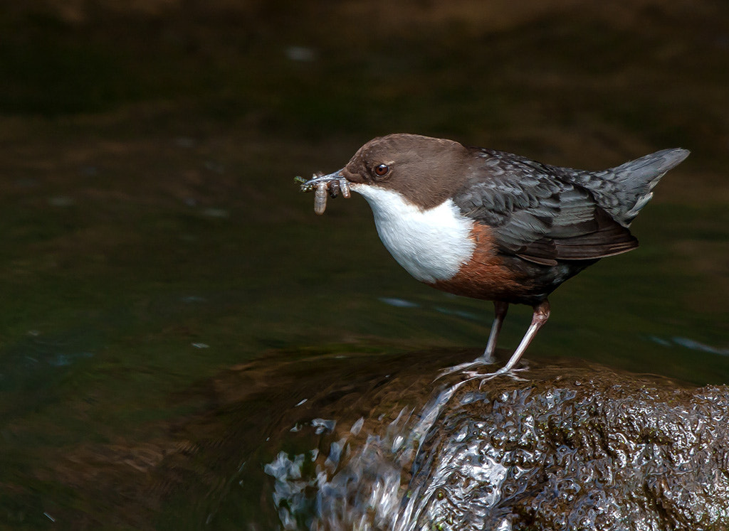 Photograph Dipper by TomMelton on 500px
