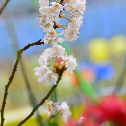 Spring flowers, Nikon D3200, AF Zoom-Nikkor 70-300mm f/4-5.6D ED