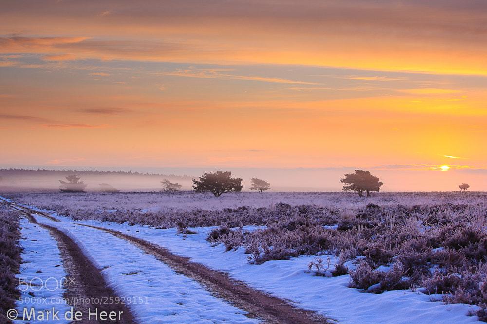 Photograph Frozen Savanna by Mark de Heer on 500px