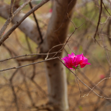 Beautiful pink flower among, Canon EOS 3000D