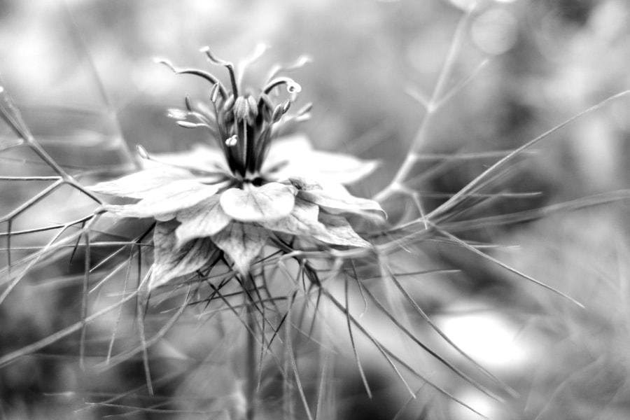 La collerette ( The ruffle) de Christine Druesne sur 500px.com