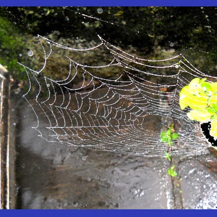 Spider-web- near flower pot, Nikon COOLPIX L20