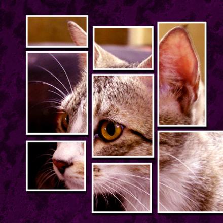 Cat portrait in frames, Canon EOS 3000D
