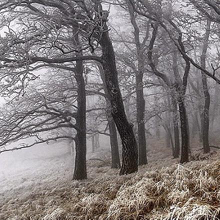 ice cold frost, Fujifilm FinePix S7000