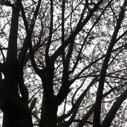 Black tree.jpg, Samsung Galaxy S2 Plus