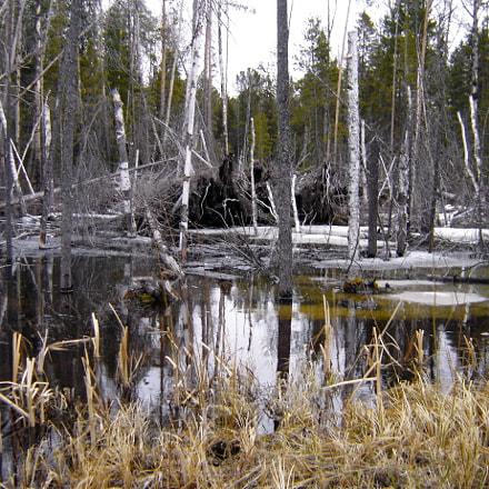 Spring swamp., Sony DSC-P93