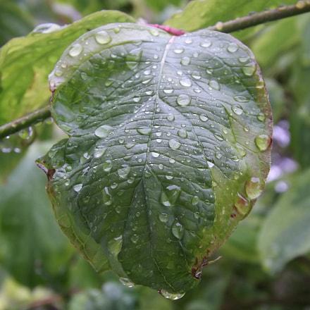 Regen, Fujifilm FinePix S4500