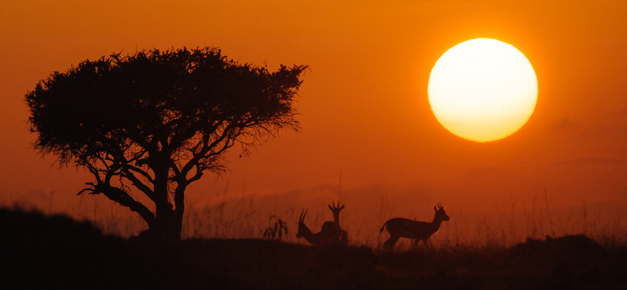 Photograph Masai Mara sunrise by Damir Dragosevic on 500px