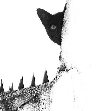 black half cat, Sony DSC-HX9V