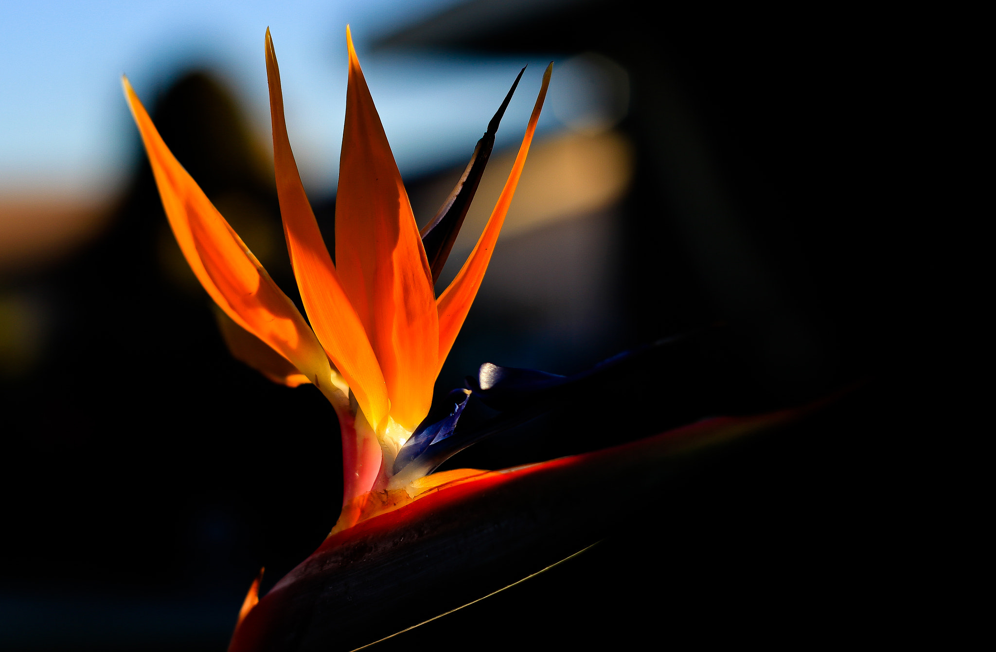 Photograph Orange by minh pham on 500px