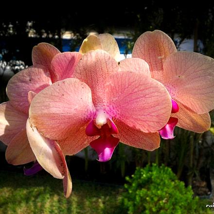 Orquídea, Samsung Galaxy Win