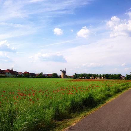 Poppy Field, Sony ILCE-6000, Sigma 19mm F2.8 [EX] DN