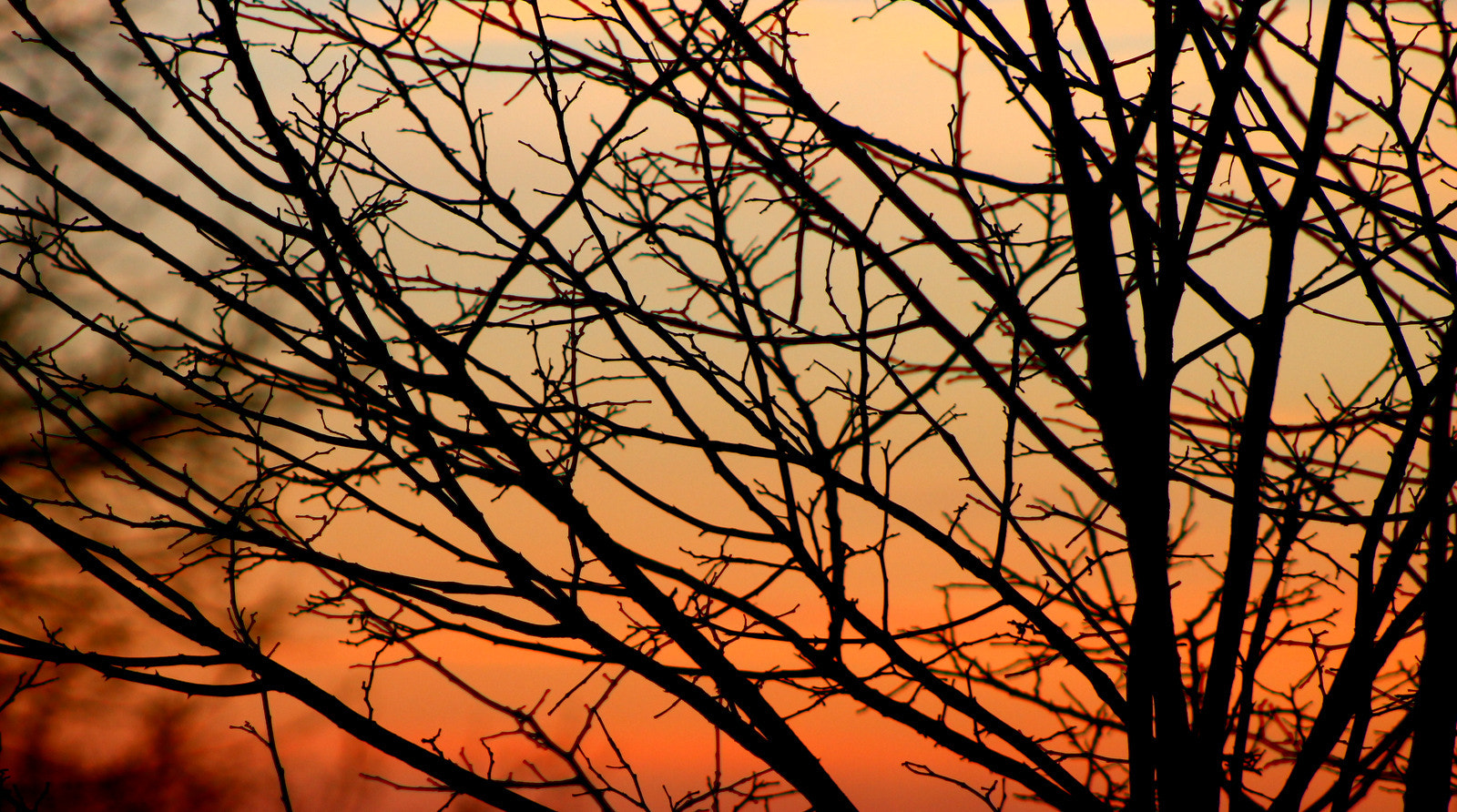 Photograph Branches. by Andrew Stein on 500px