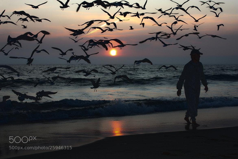 Photograph Birds by K@mané . on 500px