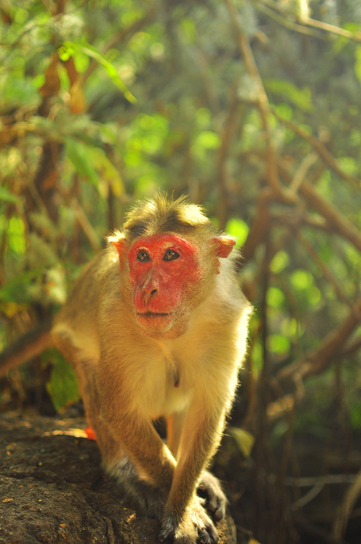 Photograph The monkey by Ivan Morozov on 500px