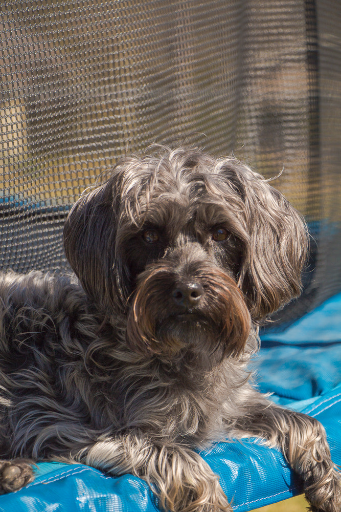 Photograph Chloe on Trampoline 4 by Tim Evans on 500px
