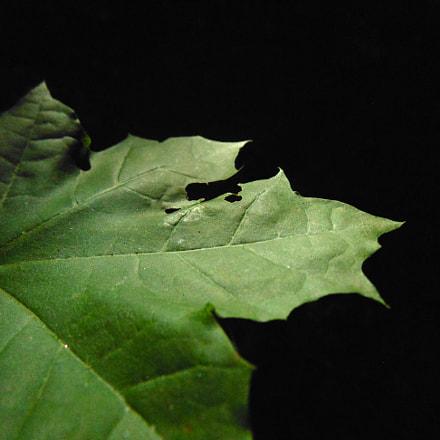 Leaf, Sony DSC-H200