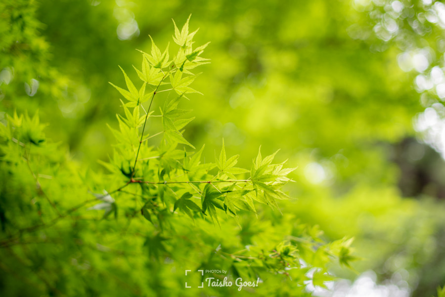 Zuihou-den 005 by Taisho G. on 500px.com