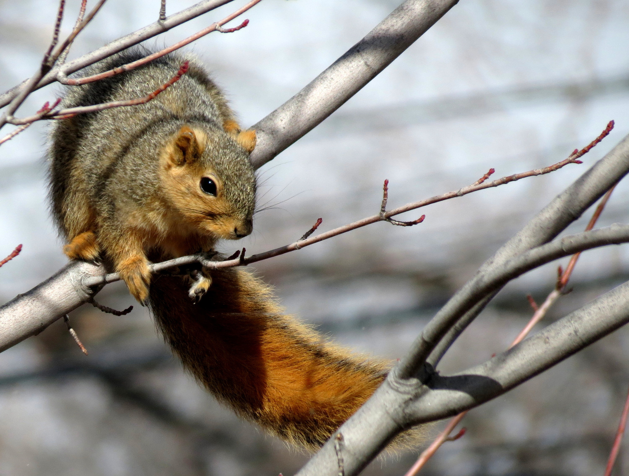 Photograph Squirrel In The Wind by Kevin Fechtelkotter on 500px