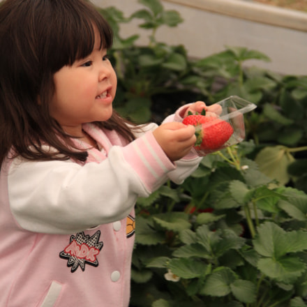 strawberry girl            IMG, Canon EOS 60D, Canon EF-S 18-135mm f/3.5-5.6 IS
