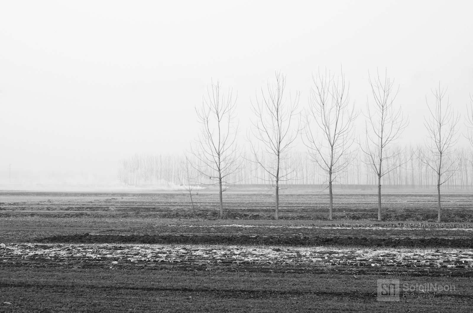 Photograph Trees in row by Soleil Neon on 500px