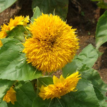 Flowers, Sony DSC-H10