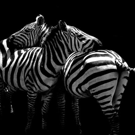 Zebra, Sony DSC-P73