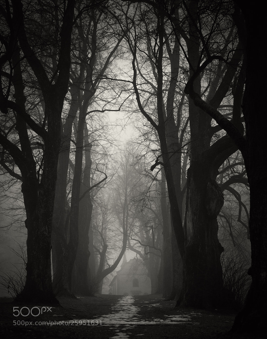 Photograph the path by Martin Waldbauer on 500px