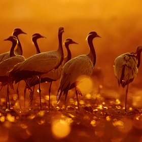 in the fields of gold by Tejas Soni (TejasSoni)) on 500px.com
