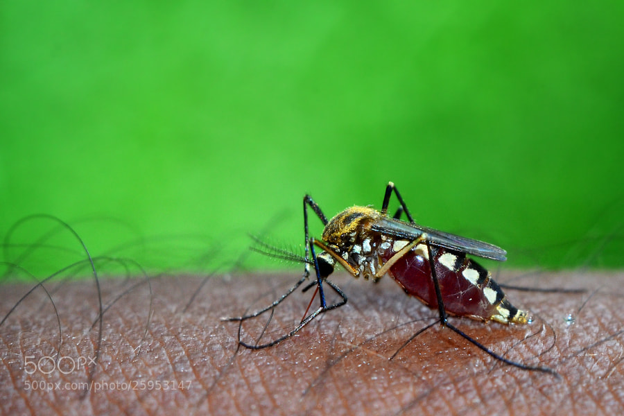 deadliest insect in the world - photo #6