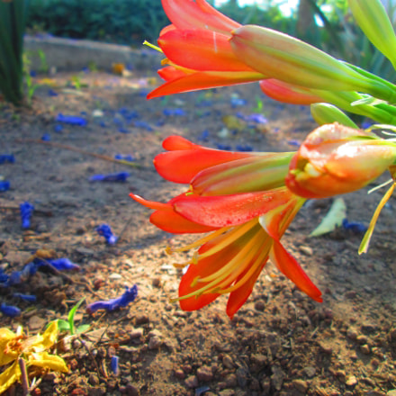 How flower, Canon POWERSHOT A2300