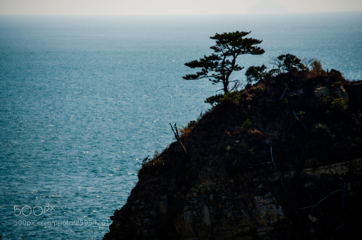 Photograph Geoje Tree by Brad Tombers on 500px