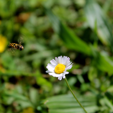 Flower in sight, Canon EOS 1100D, Canon EF-S 18-55mm f/3.5-5.6 III