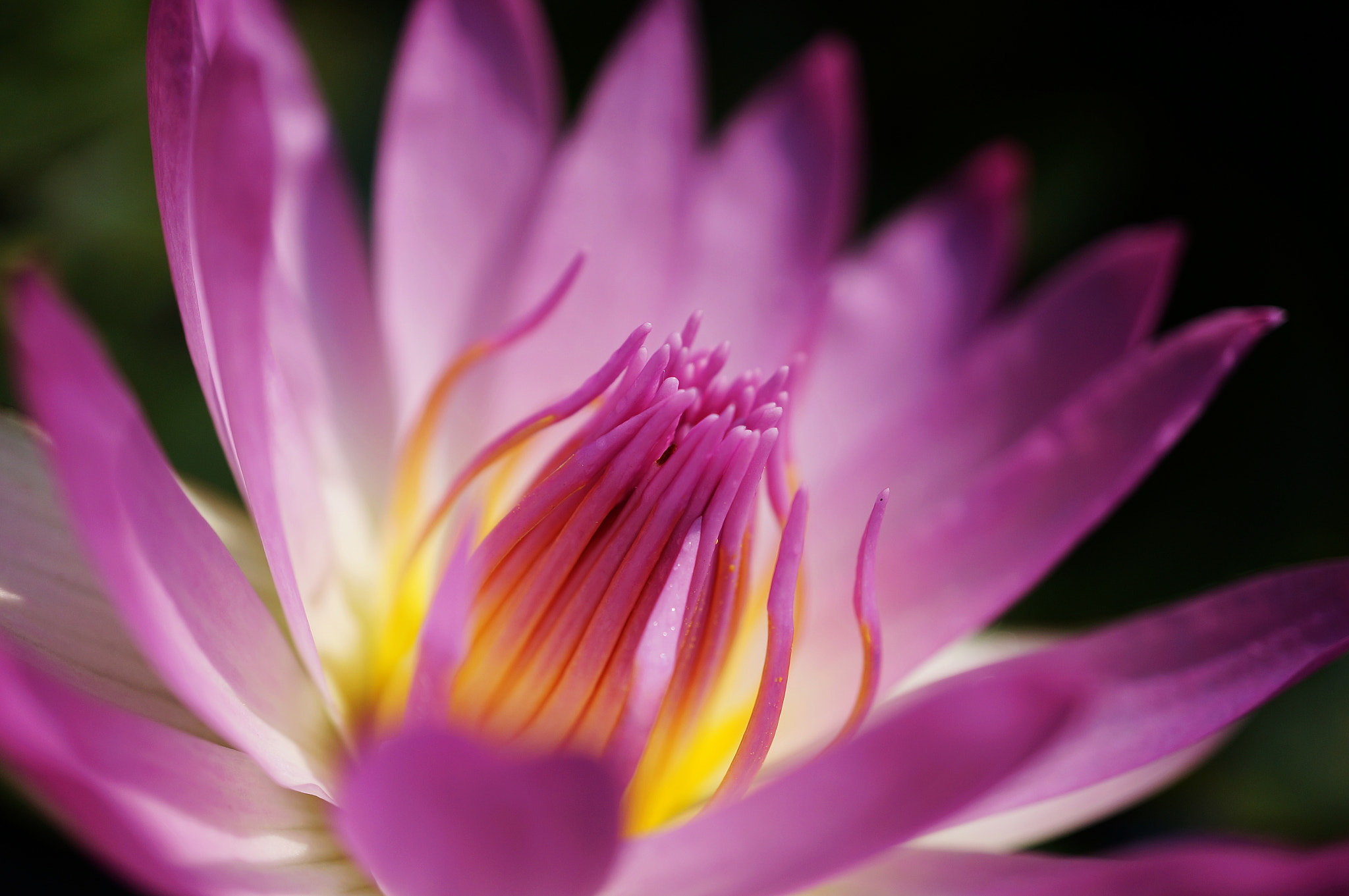 Photograph Water lily by liu han-lin on 500px