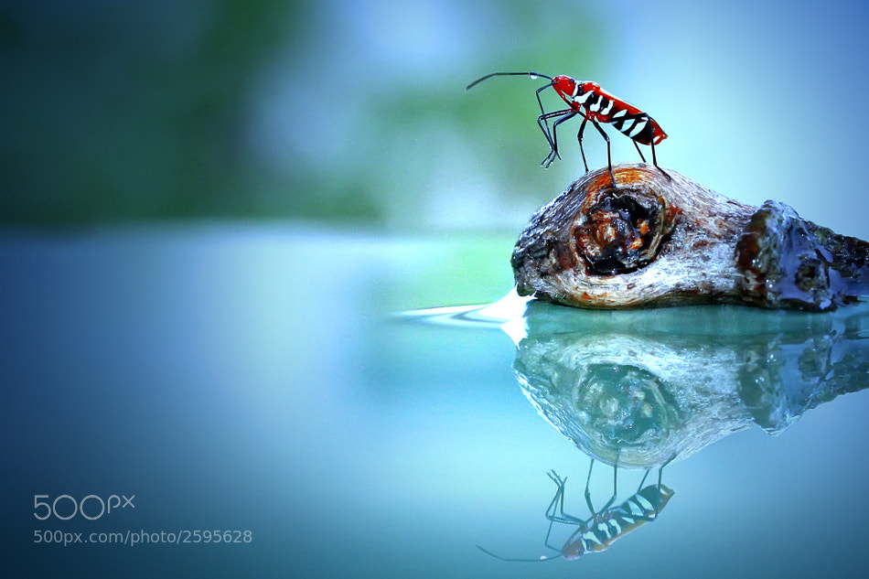 Photograph small world #2 by teguh santosa on 500px