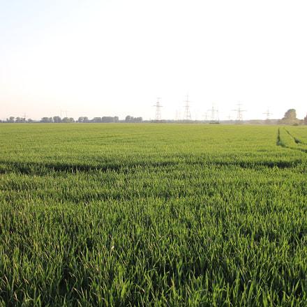 grass field, Canon EOS 800D, Canon TS-E 90mm f/2.8