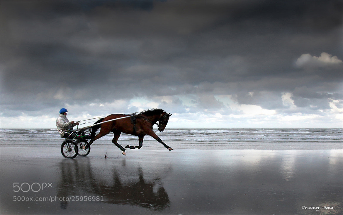 Photograph Horse Flying by Dominique Bensi on 500px