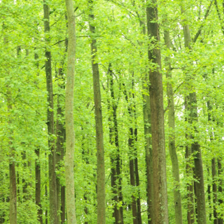 Spring Green, Nikon D300, Sigma 50-500mm F4.5-6.3 DG OS HSM