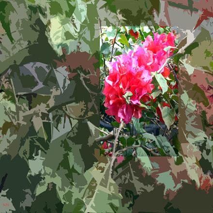 flora 4, Sony DSC-H90
