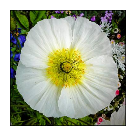 Fine fleur., Sony DSC-WX1