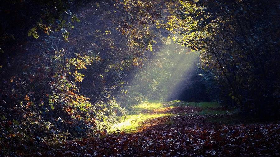 the power of the sun, автор — Cobie Simons на 500px.com